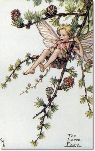 Cicely Mary Barker - Flower Fairies of the Spring - The Larch Fairy