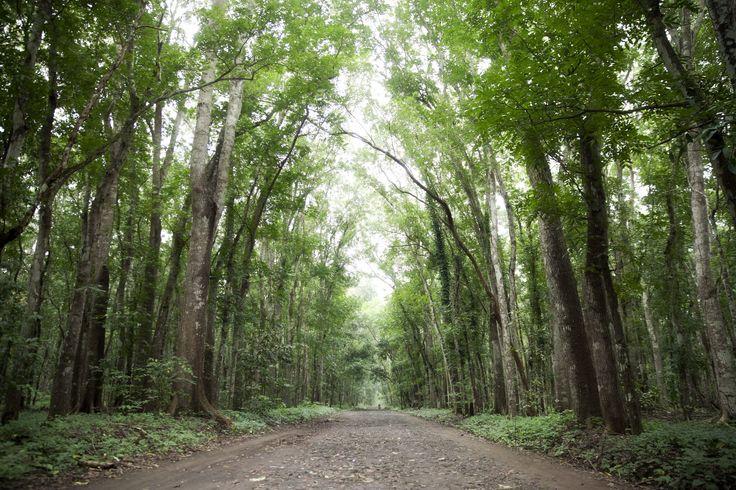 "At National Parks ""Alas Purwo"", Banyuwangi, East Java, Indonesia"