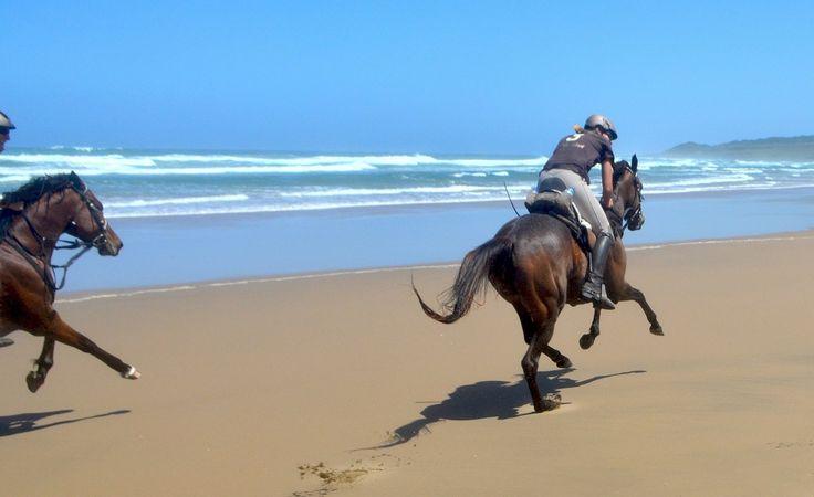 Go !!!!!  www.wildcoasthorsebackadventures.com?utm_content=buffer39c93&utm_medium=social&utm_source=pinterest.com&utm_campaign=buffer