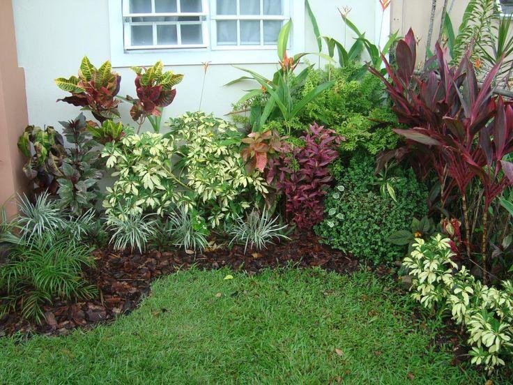 11 best images about jardines tropicales on pinterest for Jardin tropical plantas