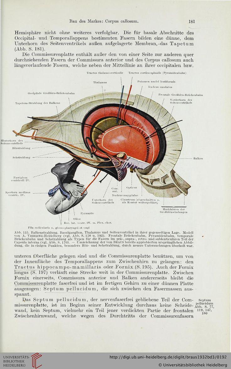 76 besten anatomy Bilder auf Pinterest | Anatomie, Auktion und Knochen