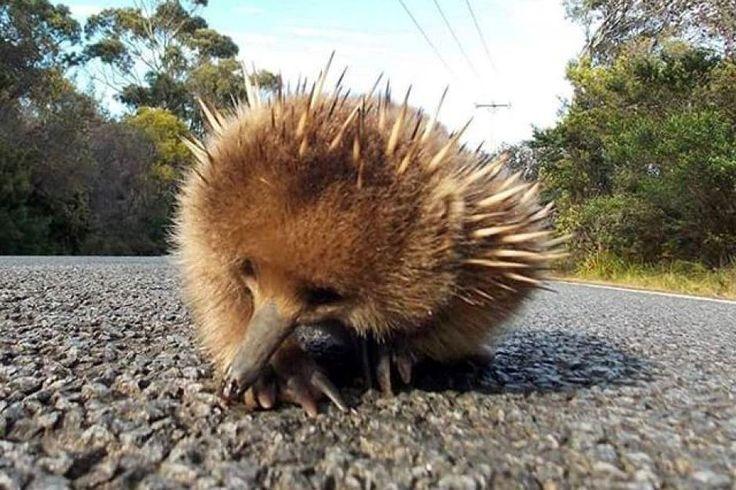 Cute little fella on Bruny Island