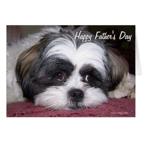 Shih Tzu Dog Father S Day Card Zazzle Com Shih Tzu Dog Shih