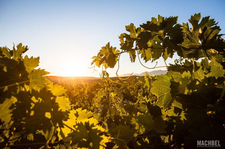 Terrenos de distintos tonos de ocre, piedra rojiza y amarillenta. Los colores cálidos se relacionan fácilmente con La Rioja alavesa, la natural y la humana. Y la confluencia de ambas en las extensiones de cultivos …