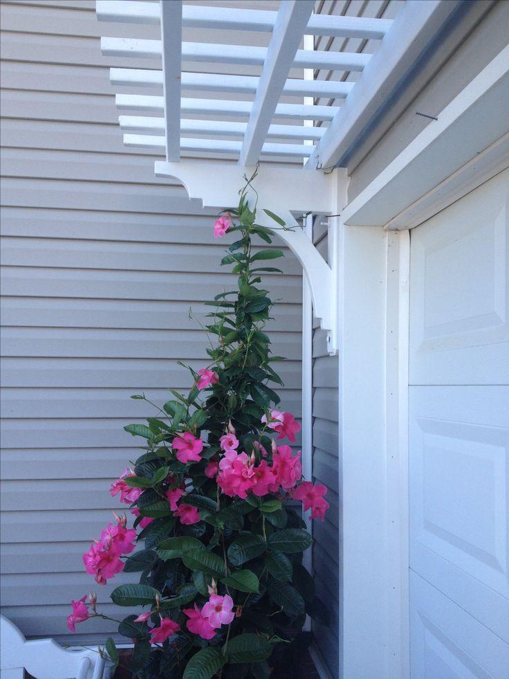Arbor over garage door with Mandevilla vine