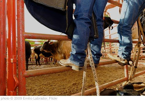the rodeo life(: