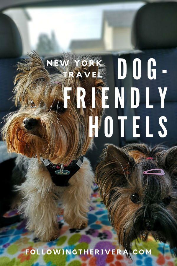 New York Dog Friendly Hotels The Crosby Street Hotel Dog