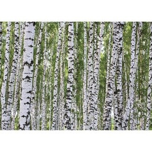Birch Tree Wall MuralBirches Trees, Trees Wall Murals