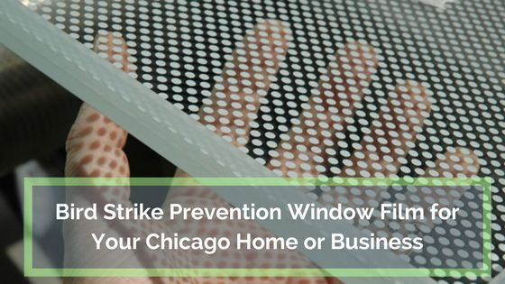 Bird strike prevention film can save bird lives as well as lower your repair and maintenance costs.