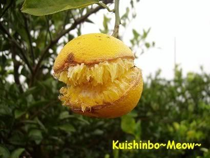 Kuishinbo~Meow~: Weekends in Hamamatsu (2 Oct, Pt 2)