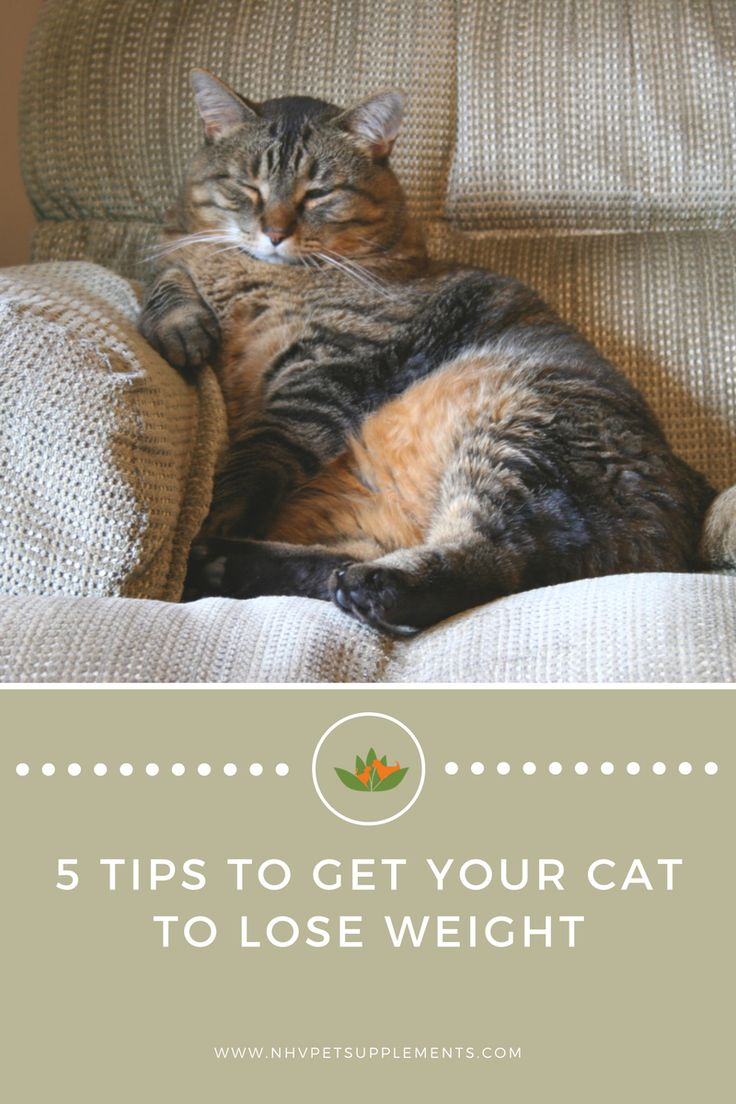 tips to lose overweight cat