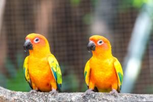 Sun Conure - Prasit photo/Getty Images