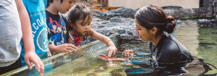 At Maui Ocean Center, we provide guests an understanding & appreciation of Hawaii's marine environment. Explore us to have an unforgettable Hawaii experience