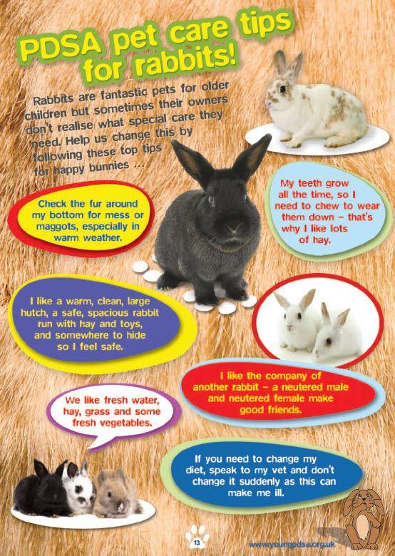 pdsa pet care tips for rabbits healthy pet pinterest