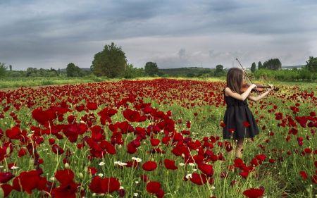 Violin Girl - field, violin, girl, flowers