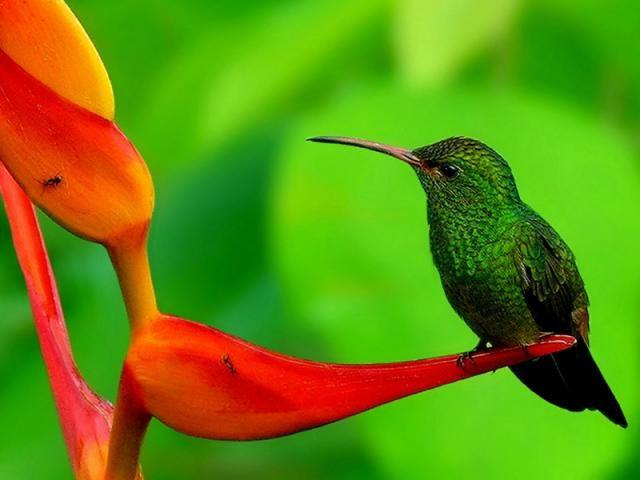 Troquilinos, colibríes, quindes, tucusitos, picaflores, chupamirtos, chuparrosas, huitsitsili (idioma nahuatl), mainumby (idioma guaraní) o guanumby, son algunos de los nombres que reciben estas...