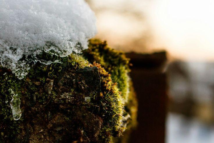 Der Winter von seiner schönen Seite   #landscape #naturelovers #wetterau #photography #winter