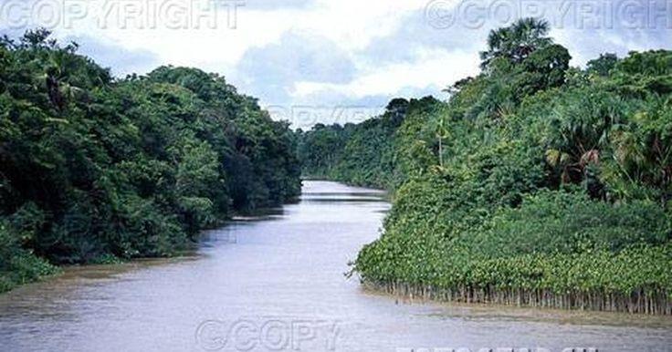 Sobre el río más largo de América del Sur. No sólo es el río Amazonas el río más largo de América del Sur, sino que es posiblemente el río más largo del mundo. El río Nilo es técnicamente más largo, pero el río Amazonas es más grande y contiene mayor volumen de agua que cualquier río en la Tierra. El descubrimiento de los afluentes del río Amazonas puede extender su longitud y convertirlo ...