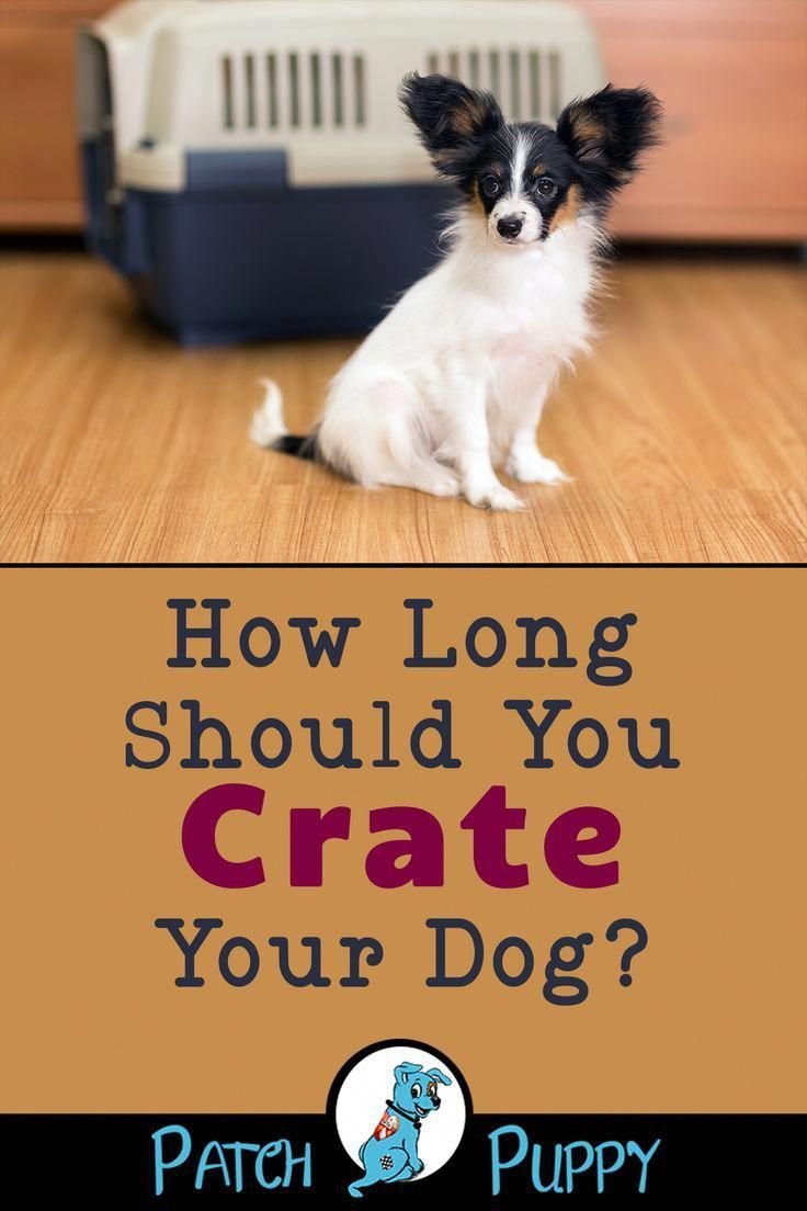 7 Simple Steps For Crate Training An Older Rescue Dog Crate