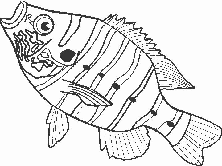 Printable Fish Coloring Pages Elegant Free Fish Coloring Pages For Kids Fish Coloring Page Tinkerbell Coloring Pages Toy Story Coloring Pages