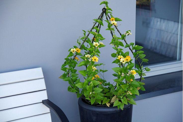 """Опора для вьющихся растений """"Пирамида"""" малая."""