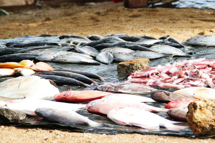 Vis, altijd vers gevangen vis op de vismarkt bij Galle, Sri Lanka