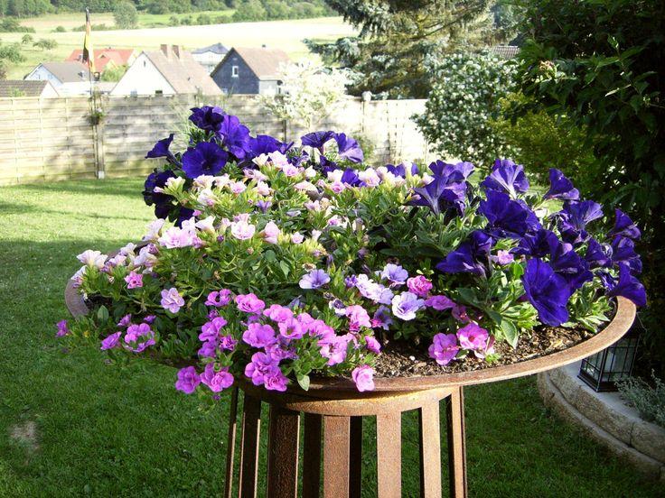 ber ideen zu petunien auf pinterest blumengarten outdoor blumenk bel und blumen im. Black Bedroom Furniture Sets. Home Design Ideas