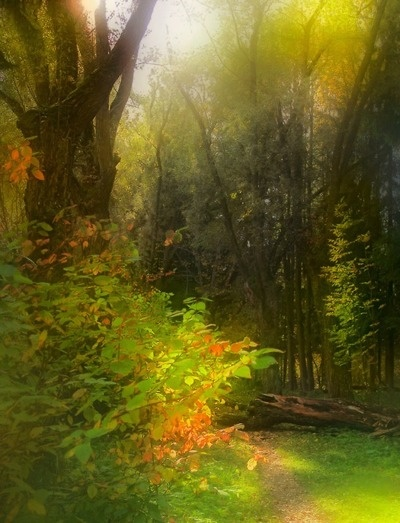 A walk in the woodsForests, Fall Beautiful, Nature, Amazing Trees, Olga Harkevich, Art, Early Autumn, Enchanted Magic, Muted Green