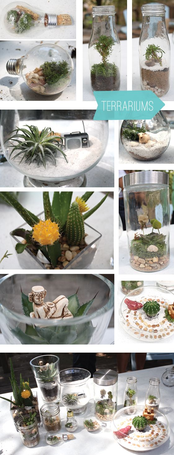 Terrariums are cool =]