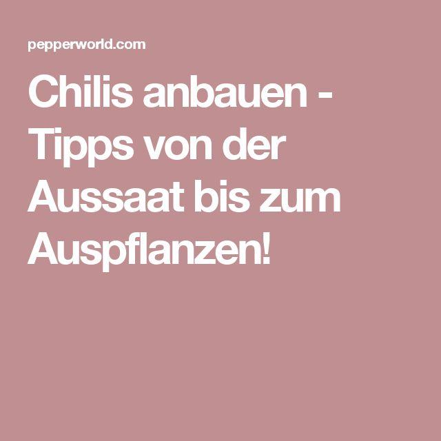 Chilis anbauen - Tipps von der Aussaat bis zum Auspflanzen!