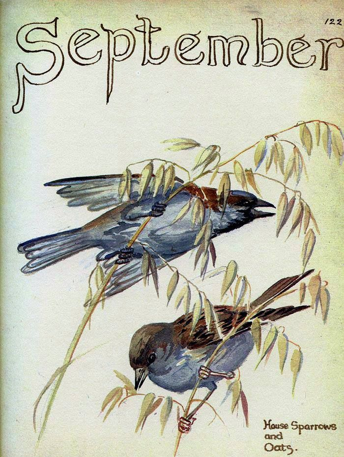 Ah, September! You are the doorway to the season that awakens my soul... but I must confess that I love you only because you are a prelude to our beloved October !!!!