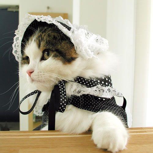 ji-fo-a: Gothic Lolita Cats / 「ゴスロリ猫 」