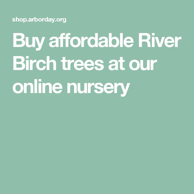 Buy affordable River Birch trees at our online nursery