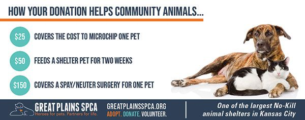 Great Plains Spca In 2020 With Images Spca Animal Shelter