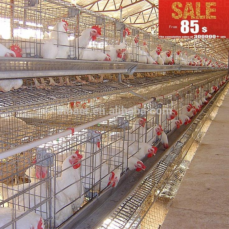 Innaer chicken cages laying hens Chicken cages, Cages