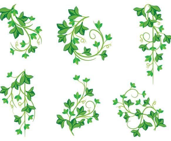 Poison Ivy Plant Poison Plant Poison Ivy Pflanze Plante De Lierre De Poison Planta De Hiedra Venenosa Poison In 2020 Poison Ivy Plants Ivy Plants Poison Ivy,Crib Tents Safe