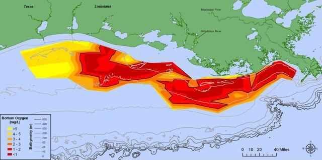 """Fuori controllo la """"Zona Morta'' ( del tutto priva di forme di vita) del Golfo del Messico La """"Zona Morta'' del Golfo del Messico ha raggiunto un nuovo record. A rivelarlo è uno studio della NOAA. E' di 13mila chilometri quadrati l'estensione dell'area che risulta una delle più vaste mai o #ambiente #golfodelmessico #ossigeno"""