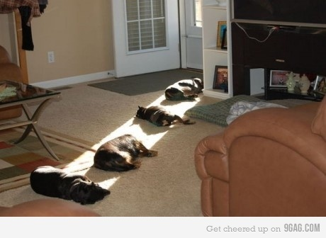 Death Ray Funny Cats Sleeping In the Sun - Funny Animal Pictures