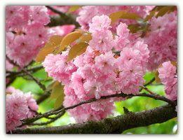 Spring Beautiful