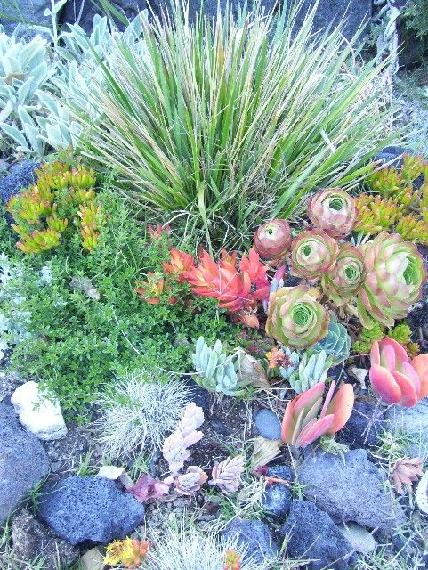 17 best images about pool plants on pinterest gardens for Garden design with succulents