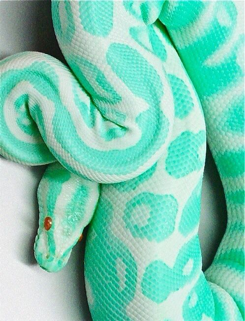Green & white pattern on snake