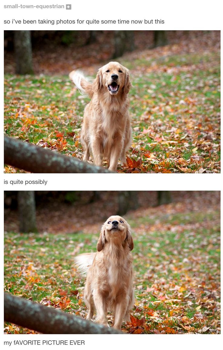 Best adorable animals images on pinterest funny images