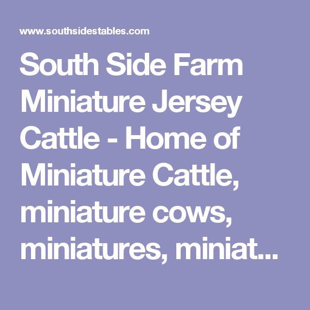 South Side Farm Miniature Jersey Cattle - Home of Miniature Cattle, miniature cows, miniatures, miniature bulls, new york miniature cattle breeder, miniture  cow, new york,miniature cattle breeder,miniature breeder,cattle breeder