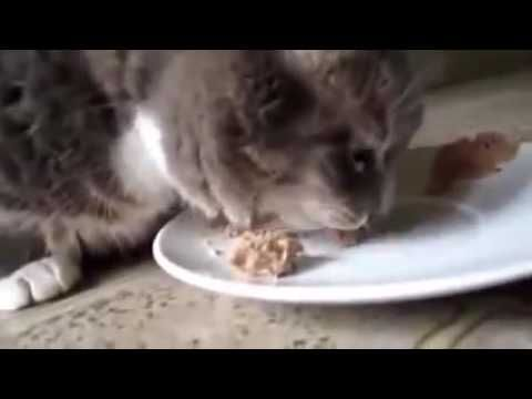Funny  - New Cute Funny Cat Videos Here
