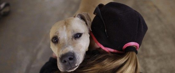 Happy #PitBullWeek! Learn 5 ways you can help these often maligned dogs.
