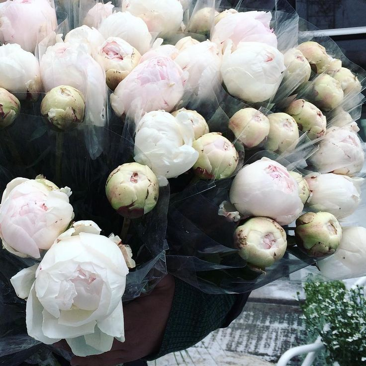 Peoner i dag, sart rosa 399 for bunten, 6 stk #fredag #godpris #lightpink