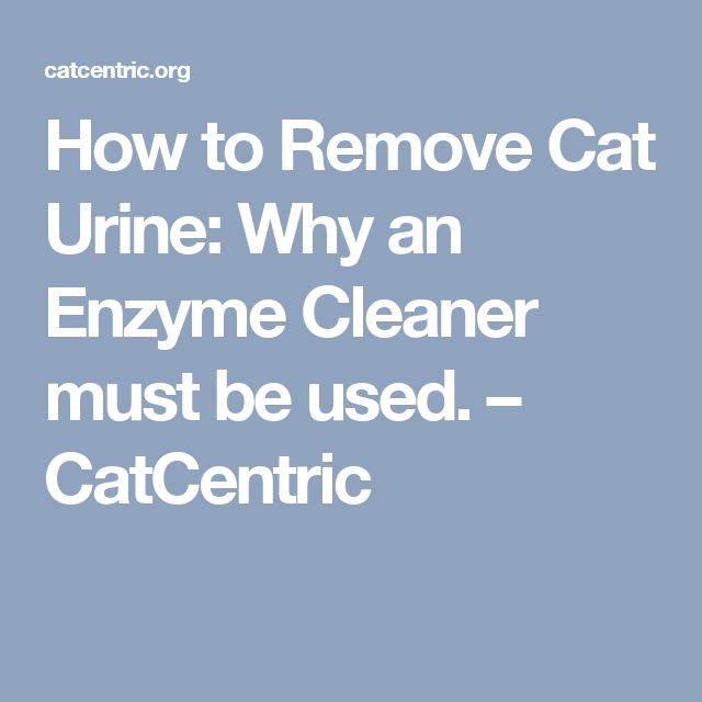 How to Remove Cat Urine: Why an Enzyme Cleaner must be used. – CatCentric