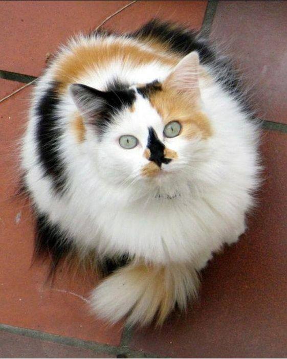 None Of My Cats Like Catnip