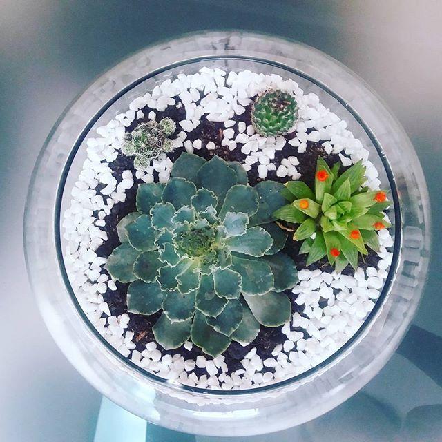 Meu terrário com suculentas. Muito fácil de fazer e cuidar. Ideal para pessoas, que como eu, só conseguem cuidar de cactos... rs #terrario #suculentas #doityourself  #DIY #plantas #jardinagem #instadecor #instahome #casaejardim #vasos #aprendendoadecorar