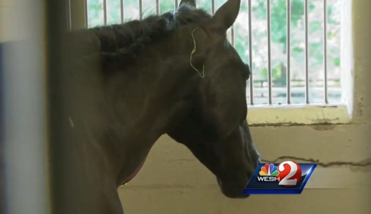 Demand Justice for Horses Injected with Gasoline